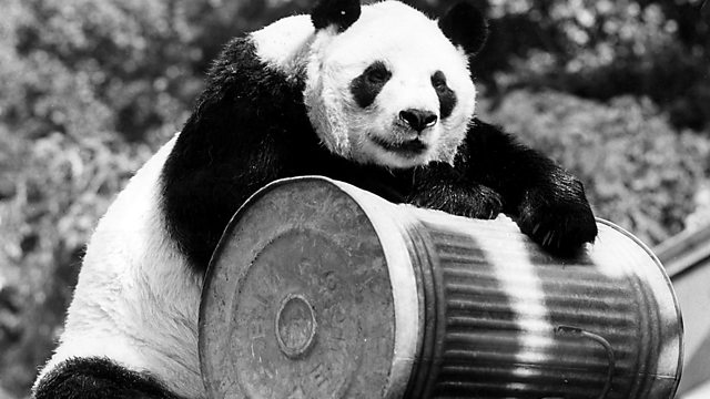 Chi Chi Panda, WWF